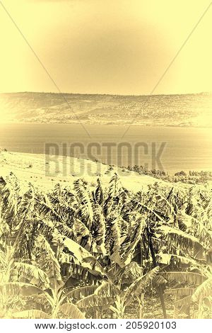 Banana Plantation on the Golan Heights near Kinneret in Israel. Banana plantation on the bank of the lake Tiberias on the background of Galilee mountains. Vintage style toned picture