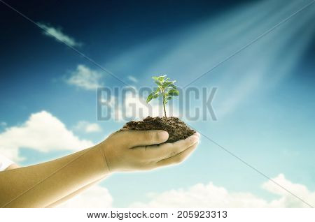 Global Warming and or Environment Sustainability Concept
