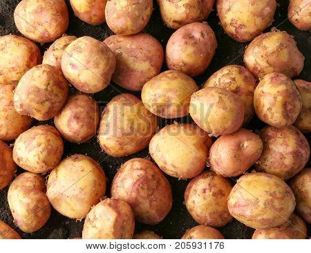 Young potatoes, closeup