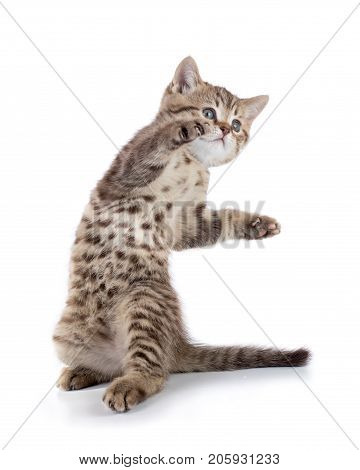 funny playful cat is standing isolated on white