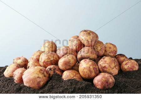 Young potatoes on ground against light background