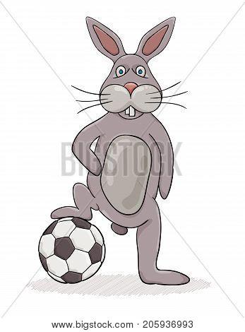 Rabbit And Ball