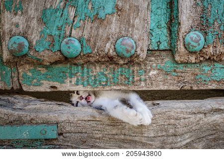 Front view of kitty leg through old wooden door hole