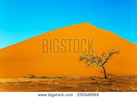 Giant orange dune and small lonely tree in the Namib Desert. Namibia, South Africa. The concept of extreme and exotic tourism