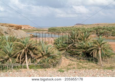Small Oasis Of Socotra Island