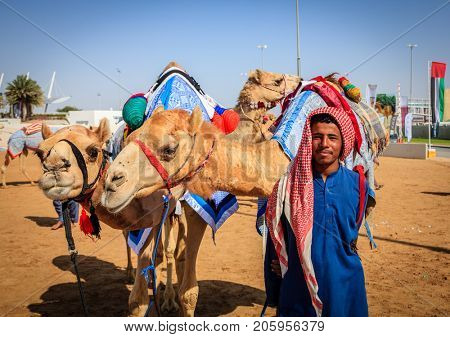 Dubai, United Arab Emirates - March 25, 2016: Camel handler with the animals at Dubai Camel Racing Club