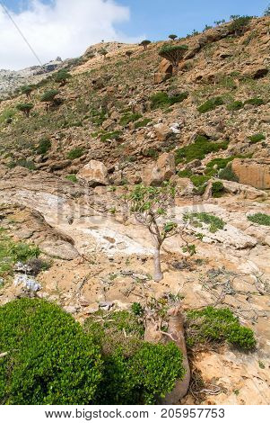 Valley In The Mountains At The Center Of Socotra Island