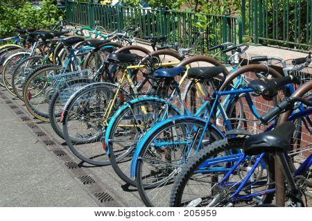 Campus Fahrräder