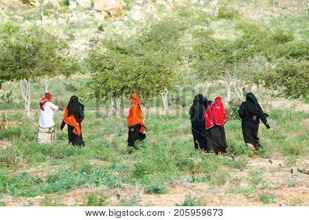 Socotra island Yemen - 16 January 2008: women dressed in the burqa on the countryside of Socotra island Yemen