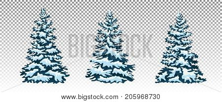 Firs in the snow. A set of Christmas trees with snow. Isolated. Festive decor. Drawing. Christmas. Vector illustration. Eps 10.