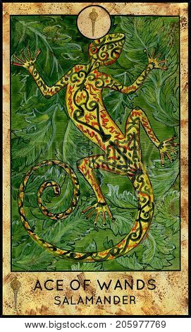 Salamander. Ace of wands. Fantasy Creatures Tarot full deck. Minor arcana. Hand drawn graphic illustration, engraved colorful painting with occult symbols