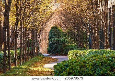 View of the alley with bare trees bushes and dry leaves lying on the ground in sunny autumn day Atlanta USA