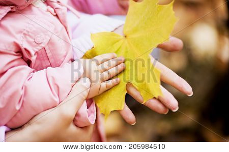 hands of a mother and baby holding a yellow leaf in the autumn park