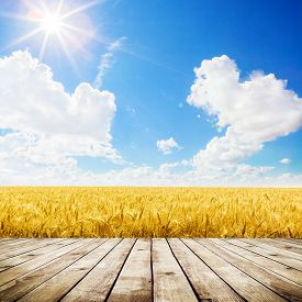 Wood floor over yellow wheat field under nice sunset cloud sky background