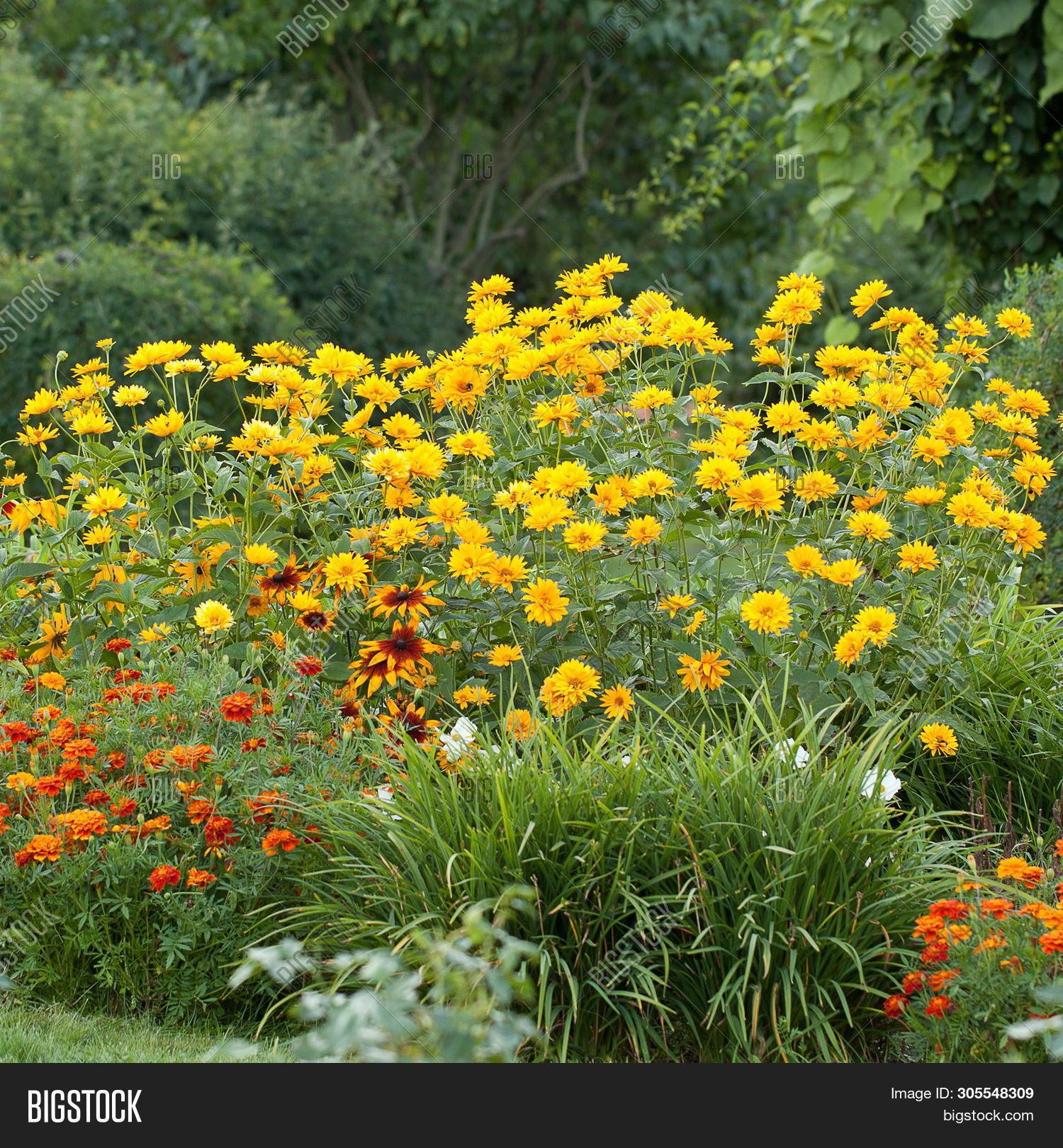 Variety Flowers Summer Image Photo Free Trial Bigstock