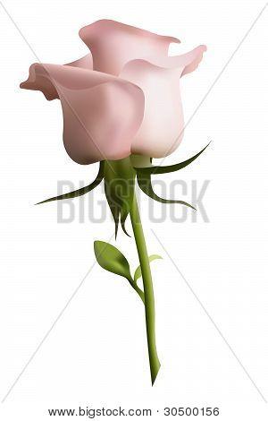 Pink Rose.eps