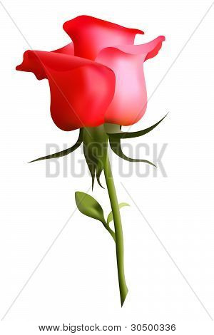 Beautiful red rose, vector