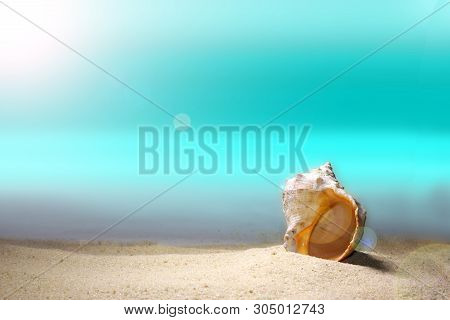 Summer Beach Background Concept. Seashell On The Beach In Summer. Summer Background. Tropical Sandy