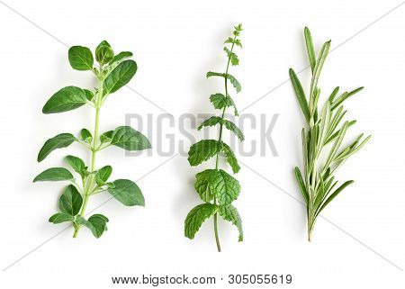 Oregano, Peppermint And Rosemary. Fresh Herds Isolated On White Background