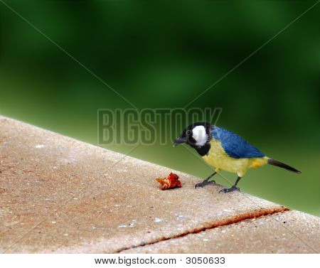 Colorful Bird With A Catch