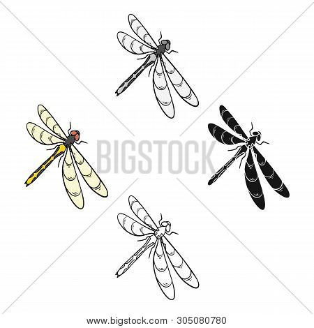 A Dragonfly, A Predatory Insect.dragonfly Flying Invertebrate Insect Single Icon In Cartoon, Black S