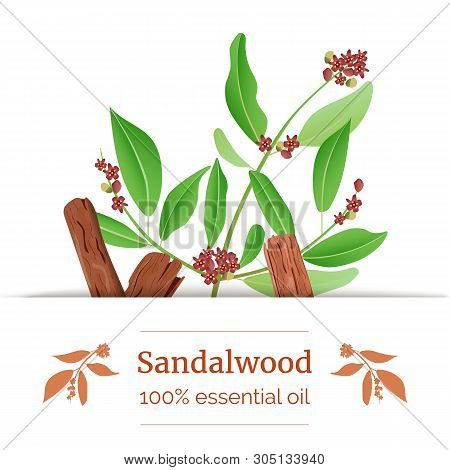 Sandalwood Sticks And Leaves Label. Card Template With Copy Space. Card Template. Essential Oil Bran