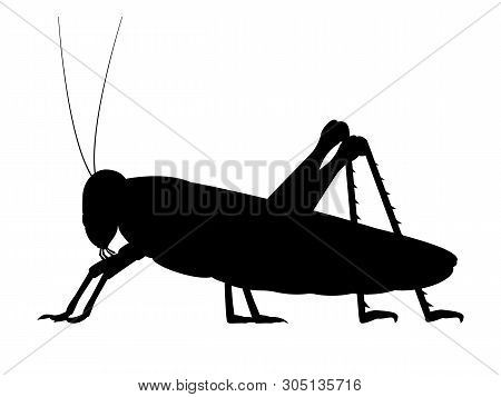 Vector Illustration Of A Black Silhouette Of A Grasshopper. Isolated White Background. Grasshopper L