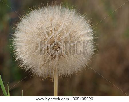 A Large Puff When Viewed At 100 Percent Reveals A Design That Is Stunning Casting A Star With Filigr