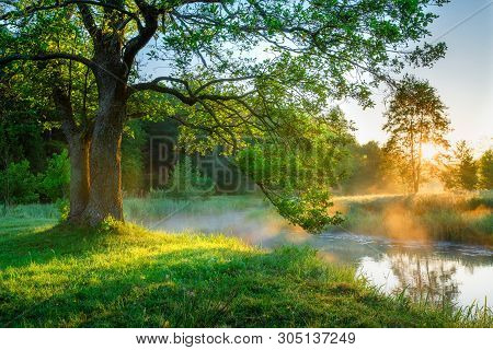 Bright Summer Morning By The Riverside. Big Green Tree On The River Bank. Fog By The River. Sunny Mo