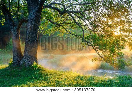 Spring Nature Scene. Beautiful Landscape. Tranquil Background, Sunlight. Scenic Beauty Meadow Backdr