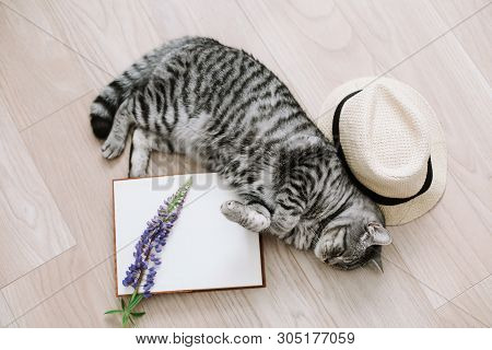 poster of Home pet cute kitten cat lying at home. Cat Portrait. Cute cat indoor shooting. View from above of funny cat sleeping. Cozy Flatlay of female blogger.