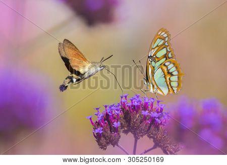 Butterflies Sucking Nectar From Flower In The Garden