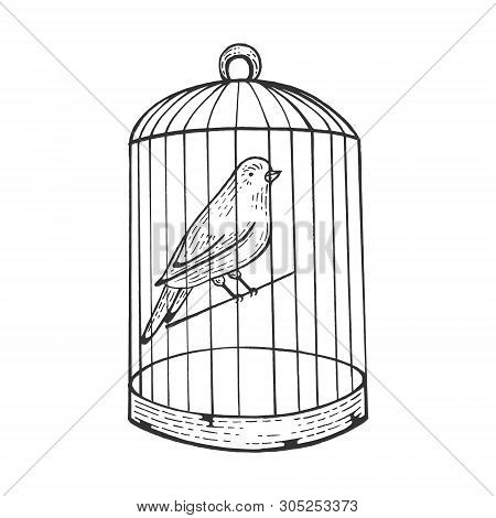 Canary Bird In Cage With Open Door Engraving Vector Illustration. Scratch Board Style Imitation. Han