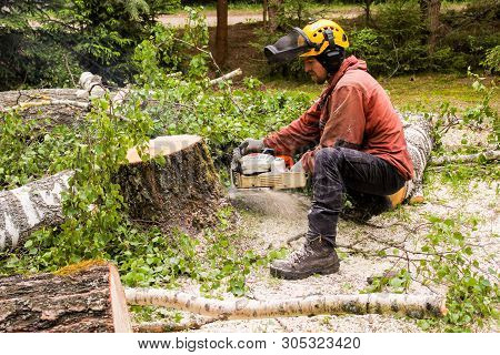 Kirishi, Russia - 24 May, Removing A Hemp Tree By A Large Chainsaw, 24 May, 2019. Removal Of Large E