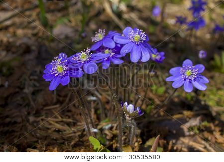 Some Flowers A Liverwort On A Wood Background.
