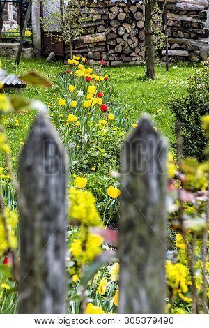 Springtime In Garden, Cicmany Village, Slovak Republic. Travel Destination. Seasonal Natural Scene.