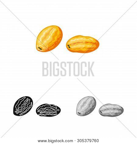 Isolated Object Of Kumquat  And Citrus  Symbol. Set Of Kumquat  And Crop Stock Vector Illustration.
