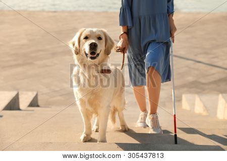 Guide Dog Helping Blind Person With Long Cane Going Up Stairs Outdoors