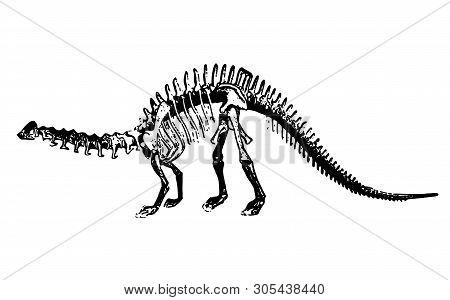Dinosaur Silhouette - The Skeleton Of An Ancient Animal. Dinosaur Isolated. Animal Anatomy - Vector