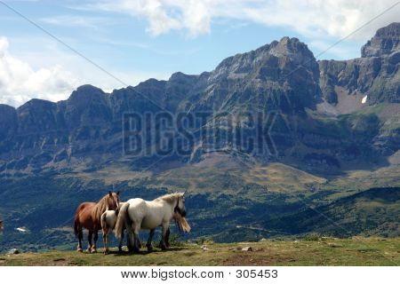 Horses & Peaks
