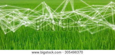 Smart Farming,industrial Agriculture Concept With Artificial Intelligence(ai). Smart Farmer Use Robo