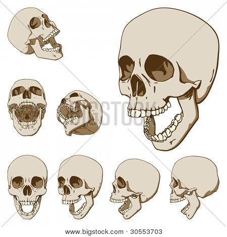 Set of seven drawings of human skull. Vector illustration