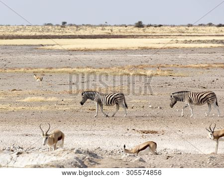 Animals Arriving At Water Hole In Namibia Desert