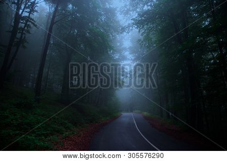 Road In The Magical Fairy Tale Foggy Forest. Spooky Woods.