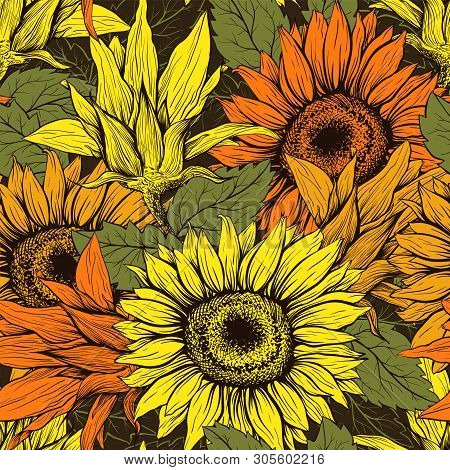 Sunflower Hand Drawn Seamless Vector Pattern. Floral Ink Pen Color Texture. Sketch Flowers Color Ill