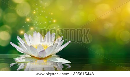 Lotus White Light Purple Floating Light Sparkle Background