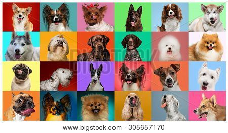 Young Dogs Are Posing. Cute Doggies Or Pets Are Looking Happy Isolated On Colorful Or Gradient Backg