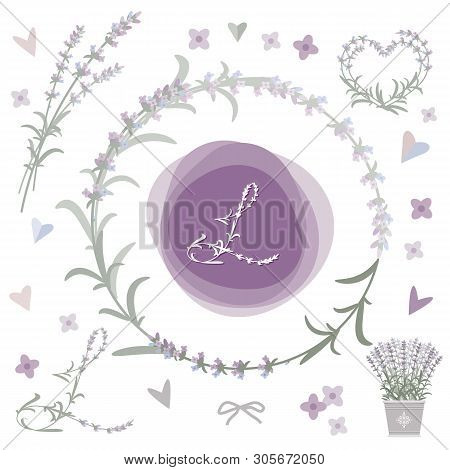 Collection Of Vector Design Elements With Lavender. Eps 10