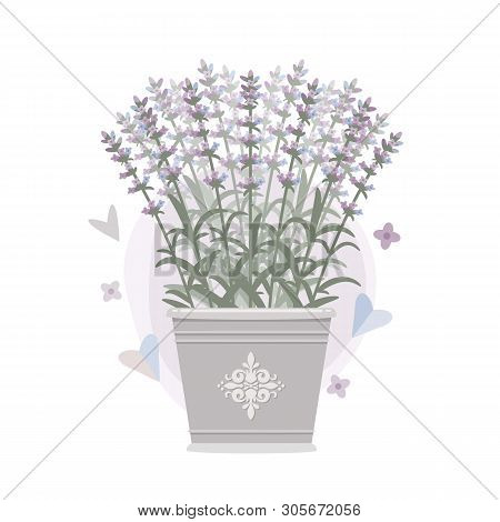 Bouquet Of Lavender In A Bucket. Vector Illustration. Eps 10