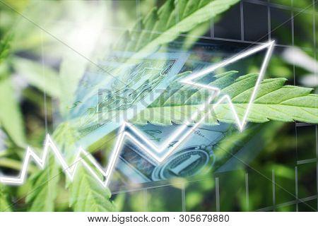 Marijuana Stocks Soaring High Quality Stock Photo